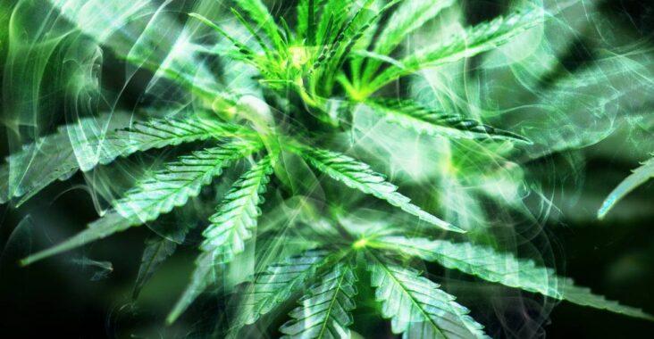 Marihuana lecznicza - jak kupić?